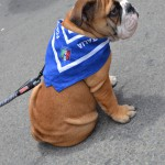 Little Paco--an Italian soccer fan